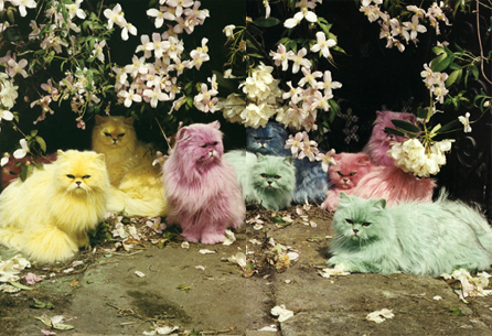 Tim Walker colourful cats
