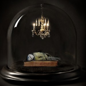 blue tit in glass dome